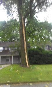 tall tree struck by lightning